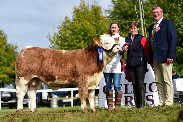 Celtic Sires Junior Bull Reserve 'Clonagh Hercules'