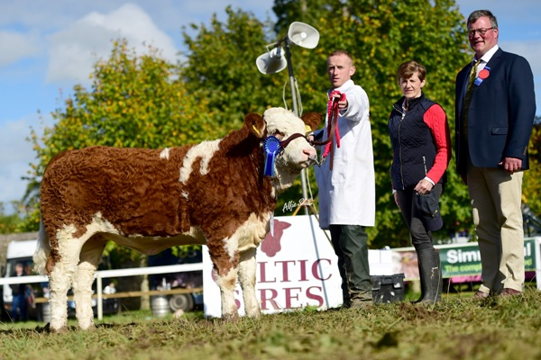 Celtic Sires Junior Heifer Reserve 'Bighill Honey Pic'