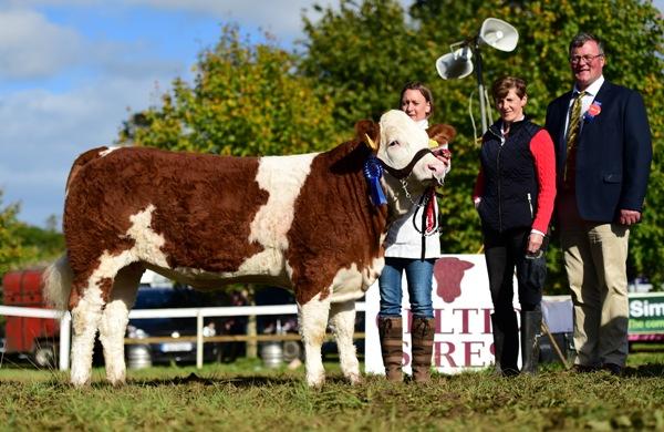 Celtic Sires Senior Heifer Reserve 'Jennalyn Gina Tina'