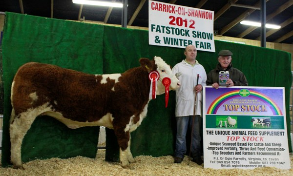 Carrick-On-Shannon Winter Fair 2012 Yearling Simmental X Heifer Class Winner