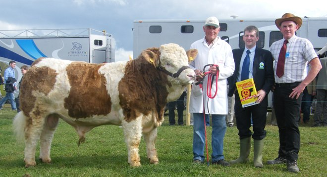 Reserve Bull 'Clonagh Accident'