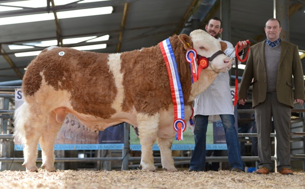 Lot 19 Senior Champion 'Jennalyn Elite Tiger'