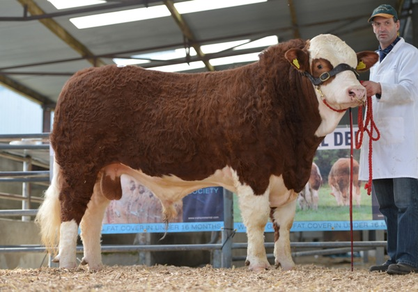 Lot 26 Bridgemount Eddie €3500