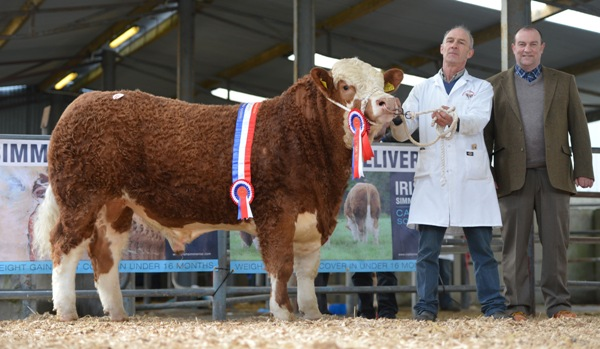 Lot 49 Junior Champion Barnattin Felix