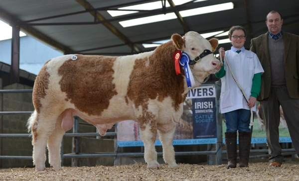 Lot 54 Junior Reserve Male Shiloh Freddy