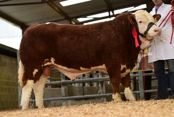 'Bridgemount Fionn' €3800