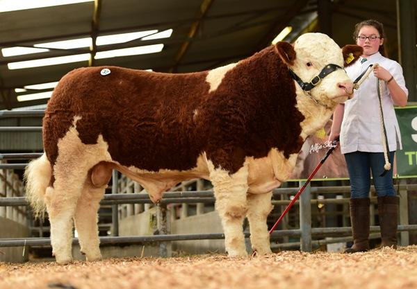 'Shiloh-Farm Forever Royal' €6600