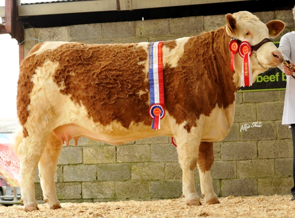 Lot 54 Female Champion 'Derrough Betty' €7000