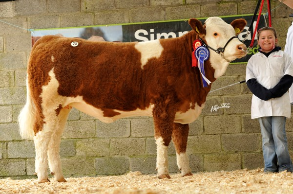Lot 72 Reserve Female Champion 'Shiloh Claudia 11 393' €5000
