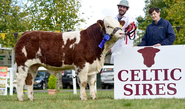Strokestown National Junior Bull Reserve Champion 'Clonagh General Almighty'
