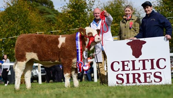 Strokestown National Junior Heifer Champion 'Lochview Gael Homemaker'