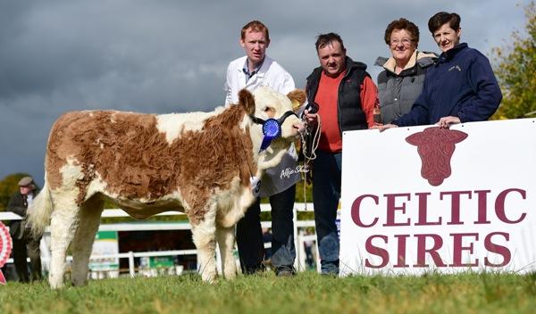Strokestown National Junior Heifer Reserve Champion 'Carrickview Grace'