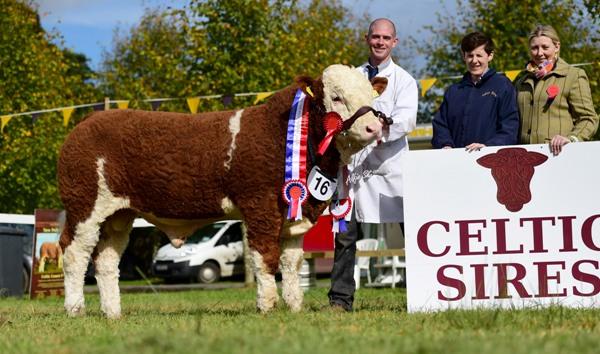 Strokestown National Senior Bull Champion 'Corbally Gino'