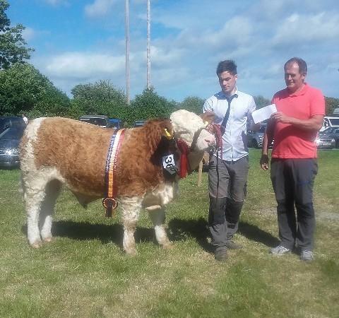 Dunmanway Show Munster Interbreed Beef Bull Calf Champion 'Mohona Guy'