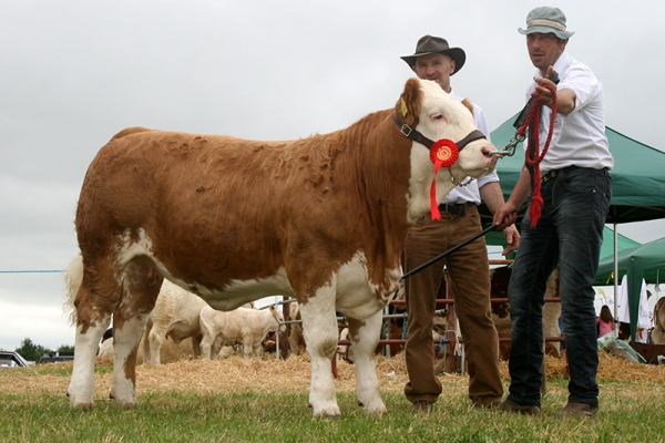 Ossory'16 Sth E Club Winner Weanling Heifer Final Jennalyn Gypsy Rose