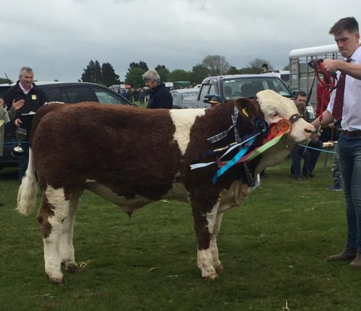 Male & Reserve Overall Champion 'Seaview Hendrix'