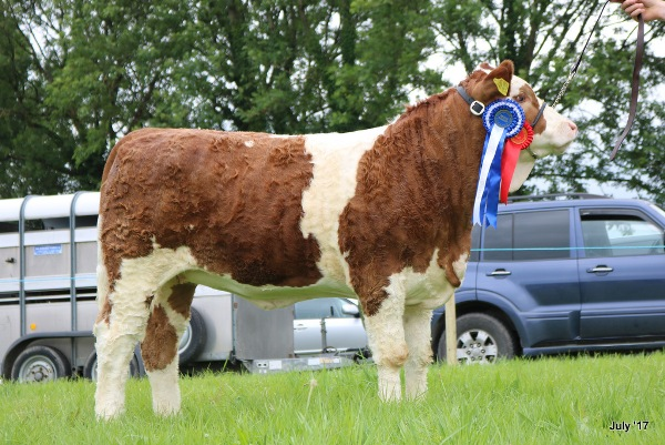 Bridgetown 2017 Reserve Champion 'Coose Her Majesty'