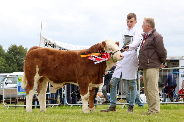 Cappamore 2017 Champion Bull Calf 'Mount Jeremy'