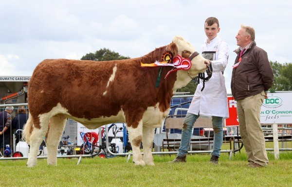 Cappamore 2017 Champion Yearling Heifer 'Mount Hilda'