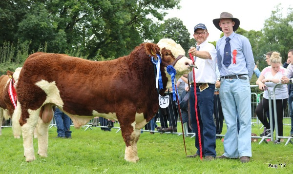 Limerick 2017 Reserve Champion 'Carbery Hero'