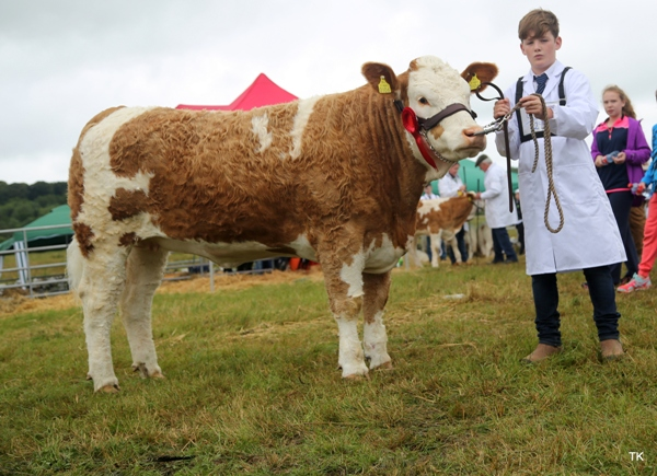 Riverstown 2017 Reserve Champion 'Fearna Glamour'