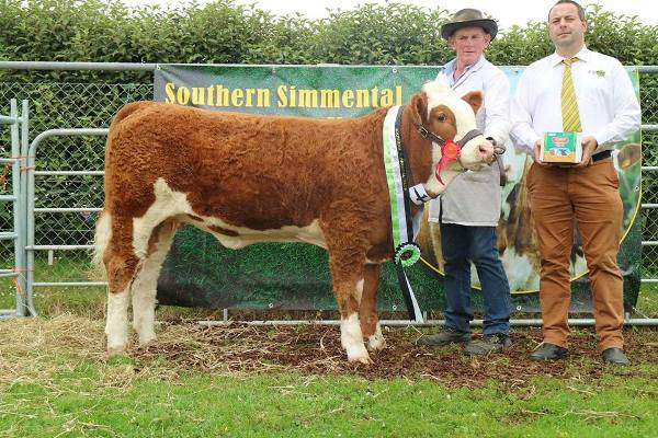 Barryroe 2017 Southern Simmental Club Weanling Heifer Calf Champion 'Raceview Heriyosa'