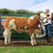 Barryroe 2017 2nd Southern Simmental Club Yearling Heifer Calf Champion 'Dripsey Honey Heart ET'