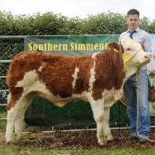 Barryroe 2017 3rd Southern Simmental Club Weanling Heifer Calf Champion 'Mohona Happy T12'
