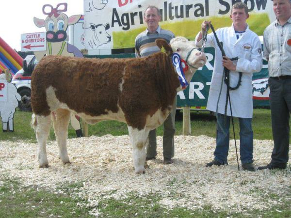 Baileborough 2011 Interbreed Champion 'Broomfield Belle'