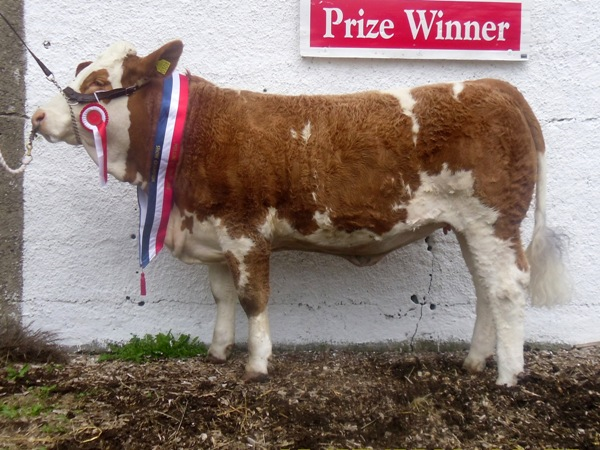 Mullingar 2011 Champion 'Clonguish Bluebell'