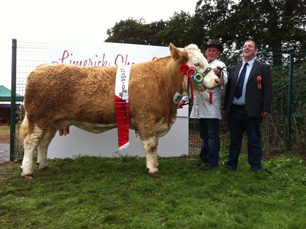 Limerick 2013 Show Champion 'Raceview Winty Matilda'
