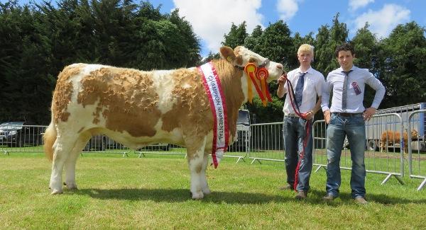 Clonmel Show Champion 'Clonagh Dora The Explorer'