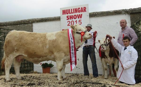 Mullingar Champion 'Clonagh Darling Eyes'