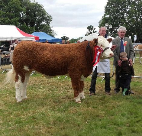 Charleville Show Female Champion 'Corbally Goddess Vintage Katie'