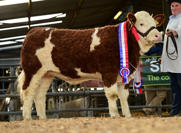 Ros1116 Yearling Heifer Champion 'Raceview Goldie Dreamer' €9000