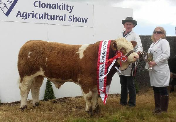 Interbreed Beef Calf & Overall Simmental Champion & 1st Bull Calf Class 'Raceview Hermon'
