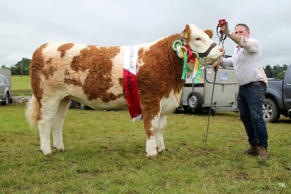 Riverstown 2017 Champion & Interbreed Champion 'Tawley Gretta'