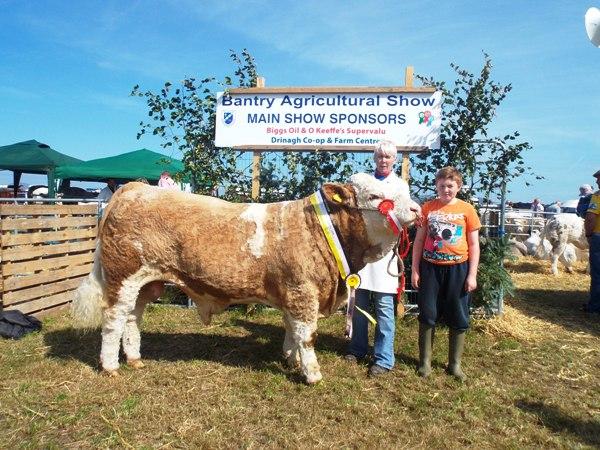 Bantry Southern Club Senior Bull Calf Champion 'Dripsey Elvis Aaron'