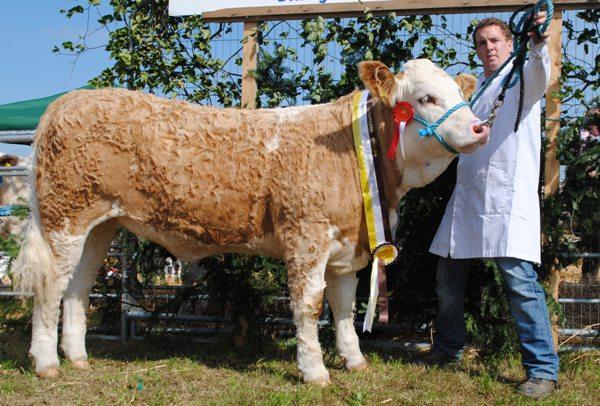 Bantry Southern Club Senior Heifer Calf Champion 'Dermody Excellent Babe'