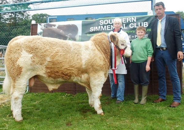 Barryroe Southern Simmental Club Aug-Sept Bull Champion 'Dripsey Eddie Rocket'
