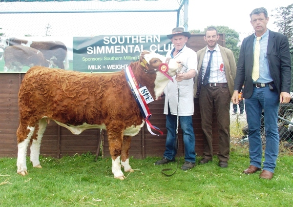 Barryroe Southern Simmental Club Aug-Sept Heifer Champion 'Raceview E Ruby Pearl'
