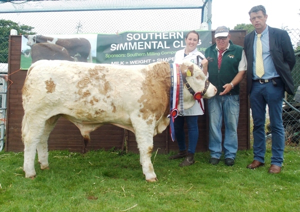Barryroe Southern Simmental Club Oct-Nov Bull Champion 'Seaview Everest'