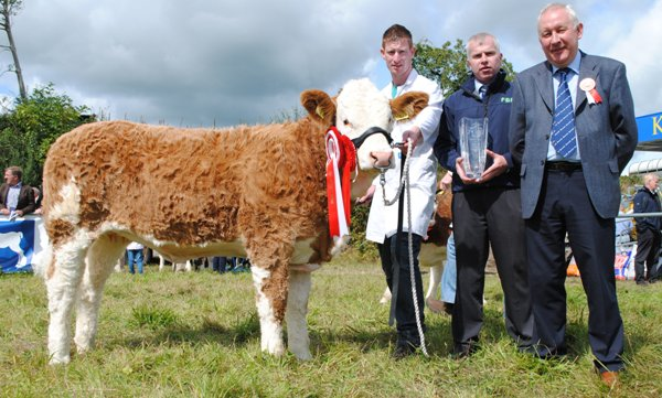 Virginia Club Sept Heifer Calf Champion 'Clonguish Elegant'