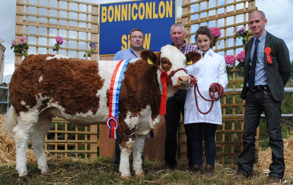 Bonniconlon National Simmental X Heifer McPadden