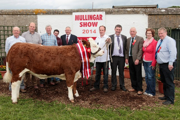 Mullingar Show Interbreed Champion 'Raceview Evita Winty'