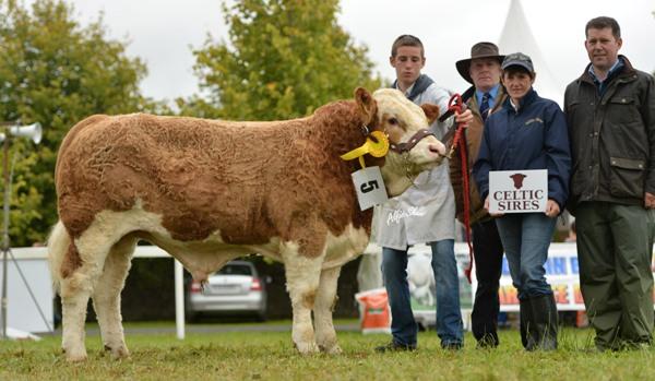 National Senior Bull Calf 3rd 'Seaview Ever Charming'