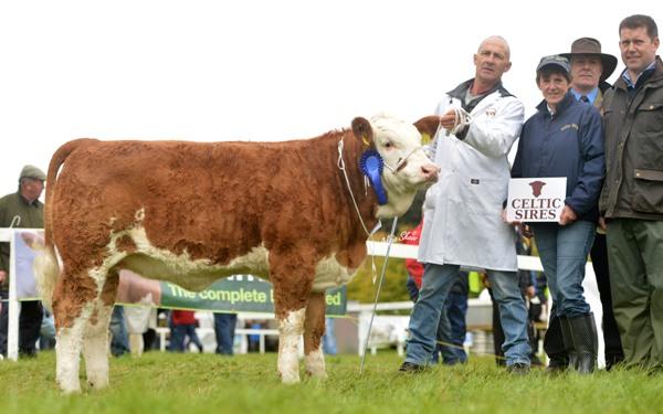 National Junior Heifer Calf Reserve Champion 'Barnattin Edel'