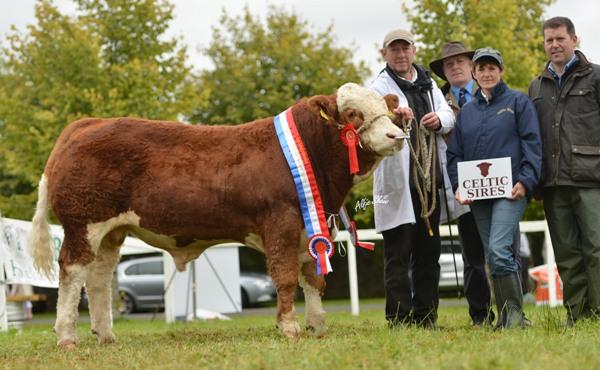 National Senior Bull Calf Champion 'Auroch Deuter P'