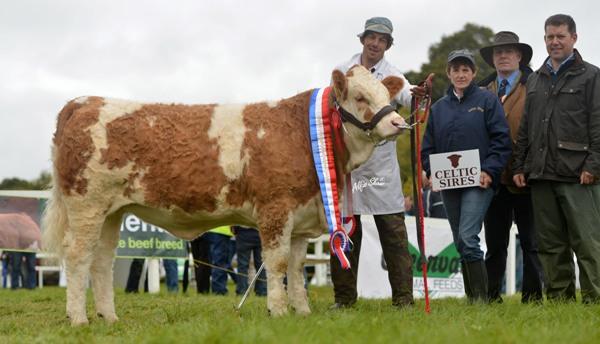 National Senior Heifer Calf Champion 'Clonagh Dora The Explorer'