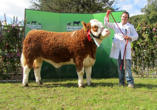 Reserve Champion 'Fearna Countess Jubilee' Exhibitors Neenan Bros.
